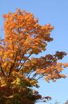 fall0172.jpg