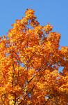 fall0173.jpg